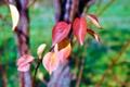 Картинка осень, листья, солнце, дерево, ноябрь