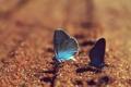 Картинка песок, бабочки, голубые