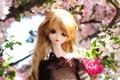 Картинка цветы, вишня, игрушка, кукла, русая