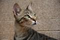 Картинка кошка, кот, мордочка, взгляд вверх