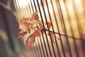 Картинка листья, забор, листок, ограда