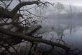 Картинка деревья, озеро, коряги, туман