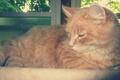 Картинка кот, рыжий, лежит