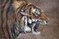 Картинка тигр, работа, рисунок, зубы, арт, пасть, клыки