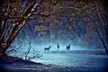 Картинка пейзаж, олени, деревья