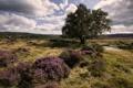 Картинка поле, лето, пейзаж, природа