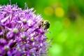 Картинка лето, цветы, пчелы