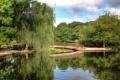 Картинка пруд, деревья, вода, отражение, мост, парк