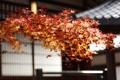 Картинка осень, природа, желтые листья, ветка