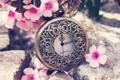 Картинка цветы, стрелки, часы, лепестки