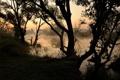 Картинка природа, река, деревья, утро