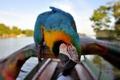 Картинка природа, птица, лодка, перья, клюв, размытость, попугай