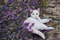 Картинка кошка, природа, картина