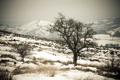 Картинка снег, пейзаж, горы, дерево