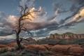 Картинка природа, дерево, каньон, Юта, США