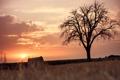 Картинка закат, поле, жнивьё, дерево