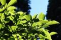 Картинка листья, nature, leaves, природа, macro, leag