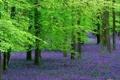 Картинка лес, деревья, цветы