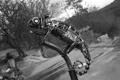 Картинка хамелеон, ящерица, железо, metal chameleon