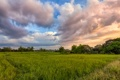 Картинка зелень, поле, лето, трава, облака