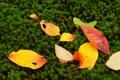 Картинка растения, мох, осень, листья