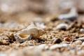 Картинка песок, макро, камни, ракушка, камешки