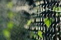 Картинка листья, сетка, забор, растение, фокусировка