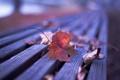 Картинка осень, листья, природа, скамья