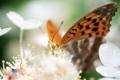 Картинка цветы, бабочка, насекомое