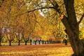 Картинка осень, деревья, речка, аллея