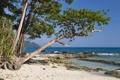 Картинка песок, деревья, горы, океан, побережье, горизонт, рифы