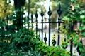 Картинка листья, макро, природа, забор, ограда, ограждение, зеленые