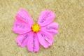 Картинка цветок, слова, love, настроения, лепестки, надписи