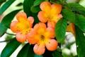Картинка листья, оранжевый, лепестки