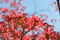Картинка небо, цветы, ветки, весна, магнолия