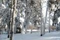 Картинка река, деревья, фото, природа, снег, зима