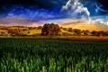 Картинка поле, небо, дерево, Andrea Andrade