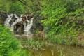 Картинка лес, деревья, река, камни, водопад