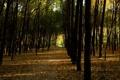 Картинка осень, деревья, парк, аллея, тропинка, солнечный свет, опавшие листья