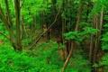 Картинка листья, лес, деревья