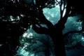 Картинка лес, туман, Дерево