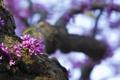 Картинка цветы, блики, дерево, размытость, цветение