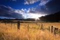 Картинка поле, лес, солнце, облака, природа, забор, колоски