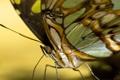 Картинка цвета, бабочка, желтый фон