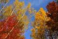 Картинка осень, небо, листья, деревья, ветки