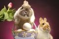 Картинка яйцо, easter, кролики, тюльпан, пасха