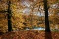 Картинка осень, листья, солнце, деревья, ветки, парк, река