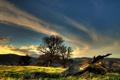 Картинка небо, облака, деревья, холмы, коряга