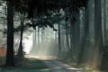 Картинка лес, дорожка, лучи, деревья