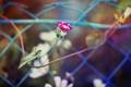 Картинка листья, розовые цветы, осень